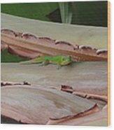 Curious Gecko Wood Print
