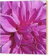 Dahlia Named Lilac Time Wood Print