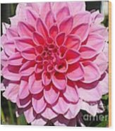 Dahlia Named Lucky Number Wood Print