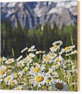 Daisies At Mount Robson Provincial Park Wood Print
