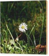 Daisy Daisy Wood Print by Isabella F Abbie Shores FRSA