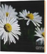 Daisy Flowers Wood Print
