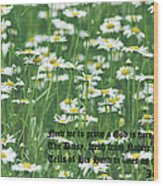 Daisy Fresh Wood Print