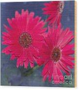 Daisy Love Wood Print