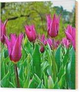 Dancing Tulips Wood Print
