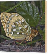 Dark Green Fritillary Butterfly Wood Print