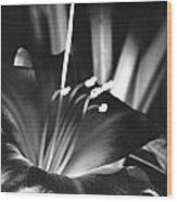 Day Lily Tippecanoe County Indiana Wood Print