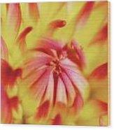 Dayglo Dahlia Wood Print
