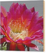 Deep Pink Cactus Flower Wood Print