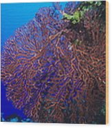 Deep Water Sea Fan Wood Print