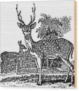 Deer Wood Print by Granger