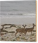 Deer On Beach Wood Print
