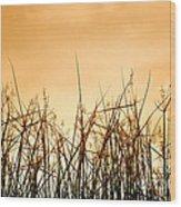Desert Grass Wood Print