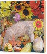 Di Milo - Flower Child - Kitty Cat Kitten Sleeping In Fall Autumn Harvest Wood Print