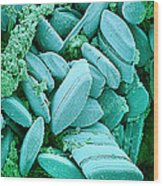Diatoms, Sem Wood Print by Susumu Nishinaga