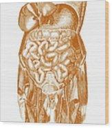 Digestive System Wood Print