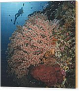 Diver Over Soft Coral Seascape Wood Print