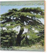 Do-00512 Cedar Forest Wood Print