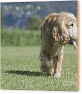 Dog Walking Wood Print