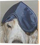 Dog With A Sleep Mask Wood Print