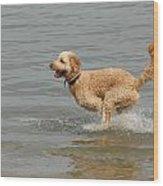 Dogs 102 Wood Print by Joyce StJames
