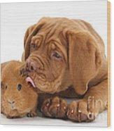 Dogue De Bordeaux Puppy With Red Guinea Wood Print