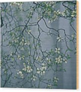 Dogwood Blossoms In A Foggy Forest Wood Print