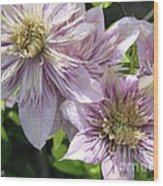 Double Clematis Named Empress Wood Print