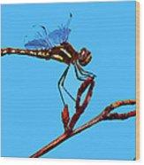 Dragonfly Art Wood Print