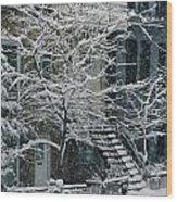 Drolet Street In Winter, Montreal Wood Print