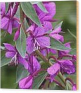 Dwarf Fireweed Wood Print