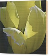 Easter Yellow Tulip Wood Print
