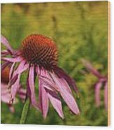 Eastern Purple Coneflower Wood Print