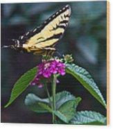 Eastern Tiger Swallowtail 3 Wood Print