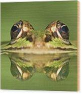 Edible Frog Rana Esculenta Wood Print