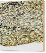 Eel Scale, Light Micrograph Wood Print