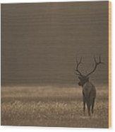 Elk Or Wapiti Bull At Sunset Wood Print