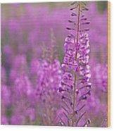 Epilobium Angustifolium Wood Print