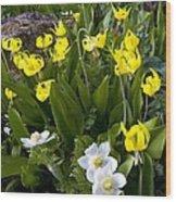 Erythronium Grandiflorum Wood Print