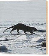 European Otter On Sea Ice Wood Print