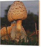 Evening Mushroom Wood Print