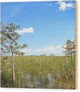 Everglades Landscape Wood Print