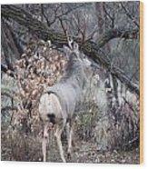 Fall Buck Wood Print