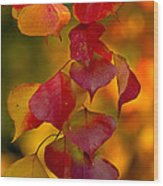 Fall Color 1 Wood Print