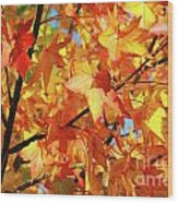 Fall Colors Wood Print by Carlos Caetano