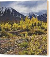 Fall Colours And Auriol Range, Kluane Wood Print