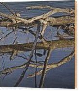 Fallen Tree Trunk With Reflections On The Muskegon River Wood Print