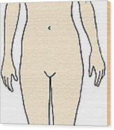 Female, Full Anterior View Wood Print