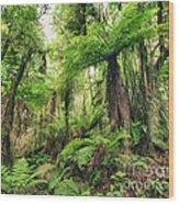 Fern Tree Wood Print