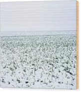Field In Winter Wood Print